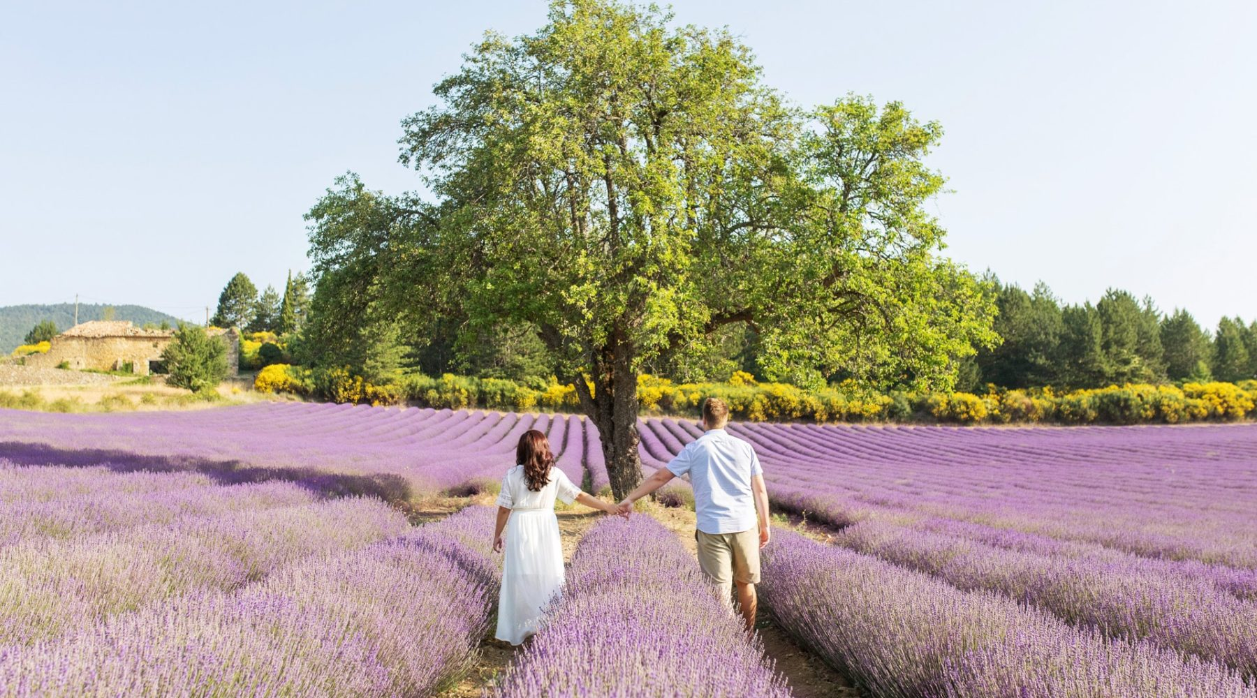 Lavender-fields-Provence-couple