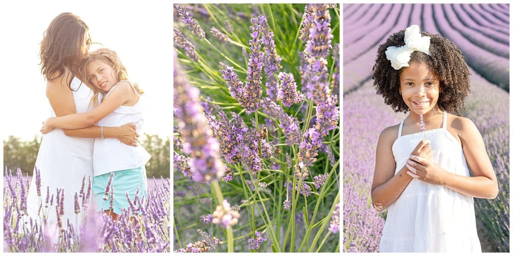 Location for a Provence photo session Sault, lavender fields