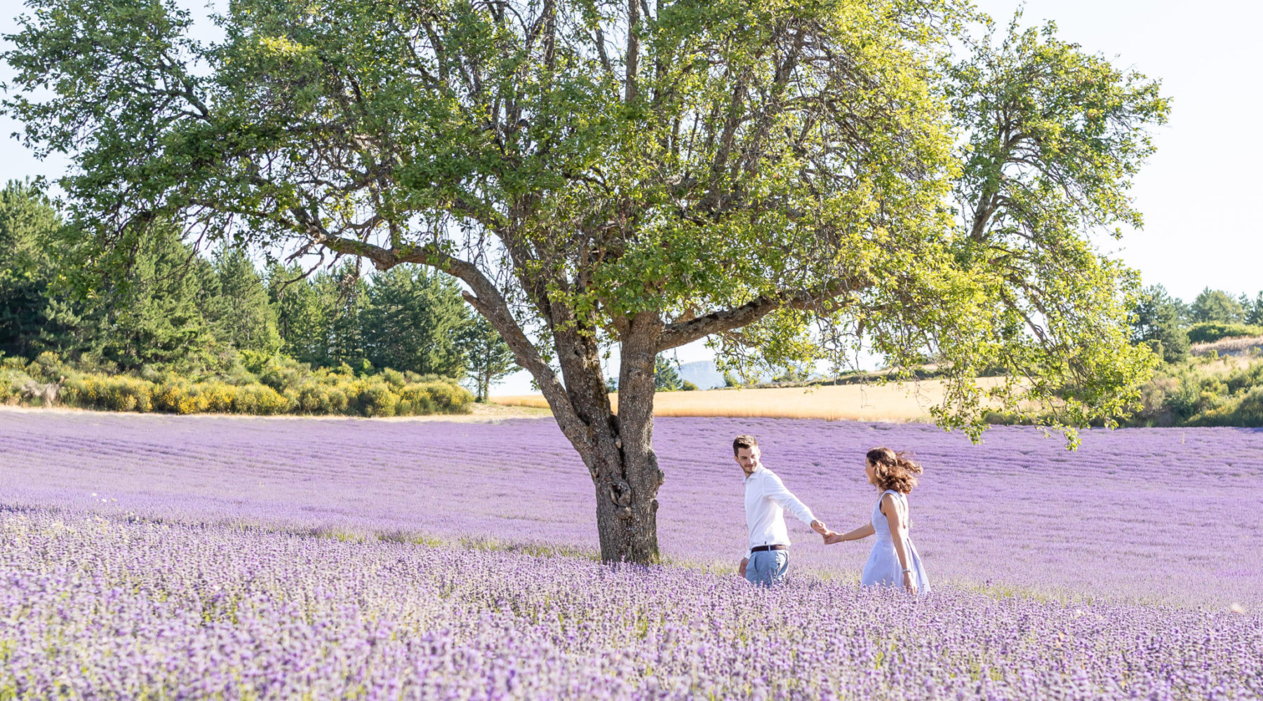 Engagement photo session in the lavender fields in Sault, Provence, France by photographer Marie Calfopoulos
